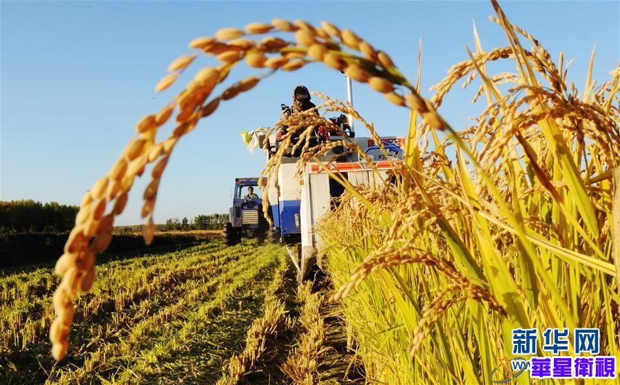 黑土龙腾新跨越——黑龙江省争当农业现代化排头兵巡礼