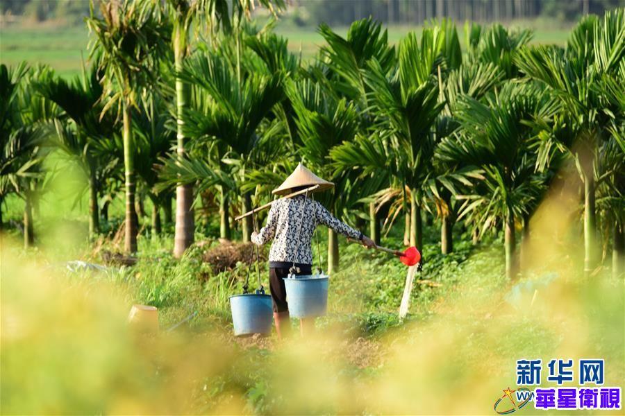 海南琼海:绿野田园春管忙