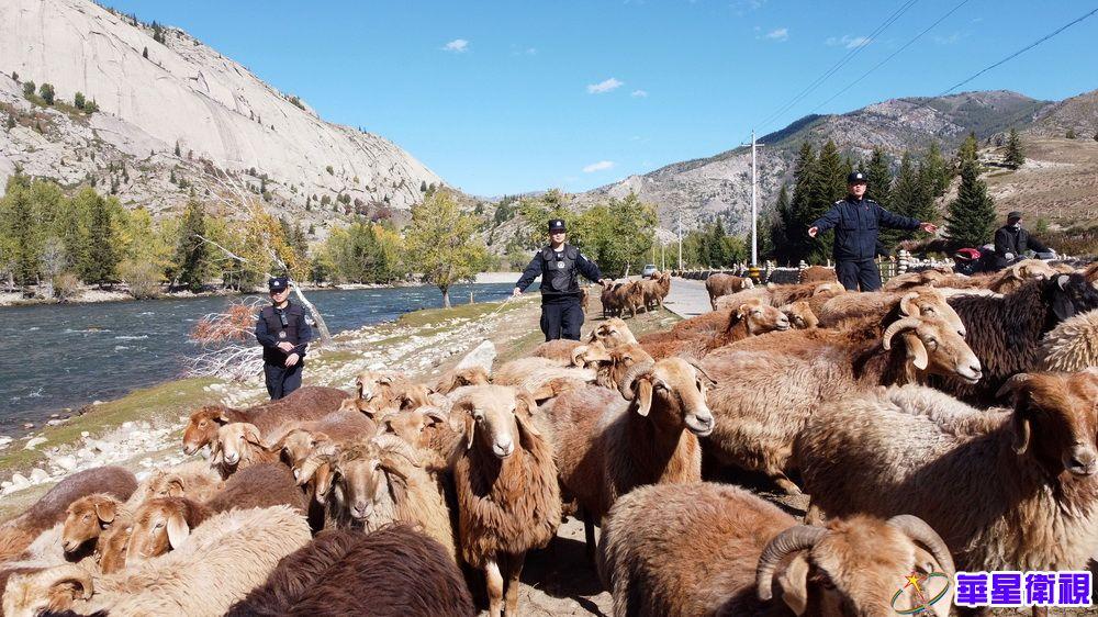 新疆阿勒泰:民警护航牧民转场