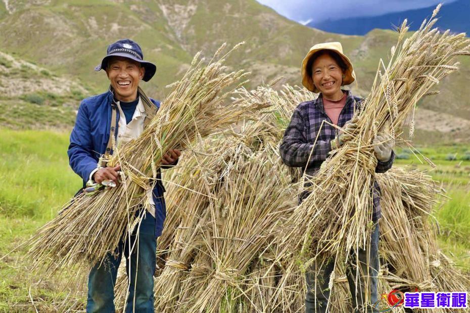 拉萨市热堆村:青稞迎来丰收季 百姓脸上喜笑颜