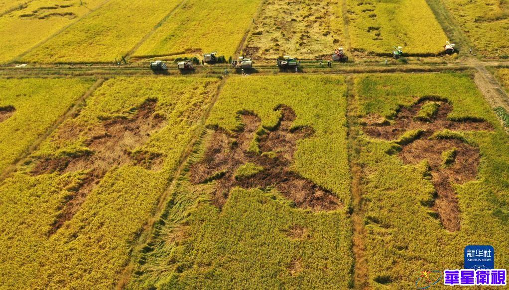 收获,在希望的田野上——写在2021年中国农民丰收节